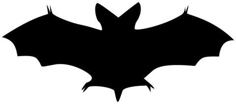 bat2.jpeg