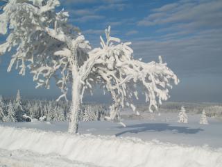 Galeria Królestwo zimy