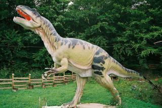 Mini park jurajski przy Muzeum Ziemi w Kletnie. Muzeum wyróżnione zostało przez Ministerstwo Kultury i Dziedzictwa Narodowego i zawiera imponującą prywatną kolekcję skał i minerałów z Polski i ze świata, w tym jedyną w Polsce kolekcję skamieniałych jaj dinozaurów.
