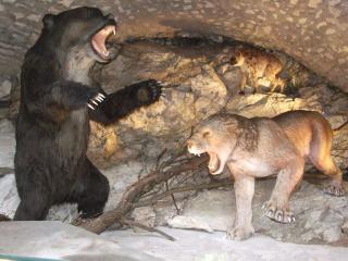 Galeria Jaskinia Niedźwiedzia w Kletnie